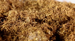 Dry tobacco. Stock Footage