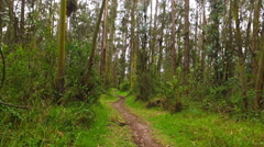 Trailblazing through the Forest Quickly - stock footage