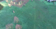 Moving aerial birdseye of park and dogs running Stock Footage