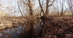 Stream Flowing Between Two Trees Without Leaves Stock Footage