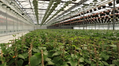 Large industrial greenhouses. Green beds. Slider Shots Stock Footage