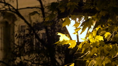 A street lamp seen through the branches of the trees, on Christmas in Budapest Stock Footage