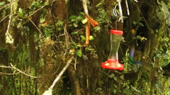Slow Motion of Two Hummingbirds Taking Turns at a Feeder Stock Footage