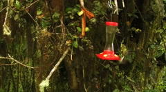 Two Hummingbirds Joust in Midair in Slow Motion Stock Footage