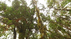 A View up at the Canopy of the Rainforest and a White Shouldered Tanager - stock footage