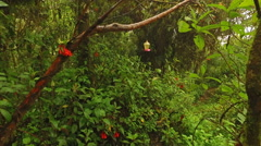 Moving Towards a Hummingbird Feeder in a National Park of Ecuador Stock Footage