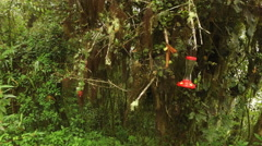 Hummingbirds Share Space at a Feeder in Ecuador Stock Footage