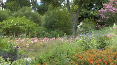 Flowers and Butterflies in Botanical Garden Stock Footage