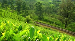Sri Lanka - Train going through tea plantation. 4K resolution. Stock Footage