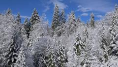 Aerial - Beautifully snow covered trees on a sunny day Stock Footage