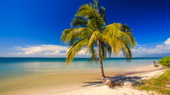 Wind Shakes High Palm Standing on Edge of Golden Sand Beach Stock Footage