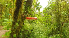 Two Hummingbirds Share a Feeder in Ecuador Stock Footage