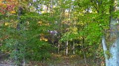 Autumn Forest Scene in North America Stock Footage