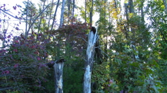Squirrel Peaks through Branches and Leaps to a Fallen Tree Stock Footage