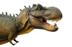 Aggressive T Rex on white background. - stock photo