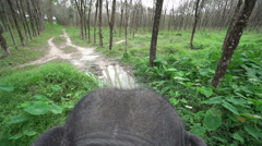 Top view of elephant ride through jungle Stock Footage