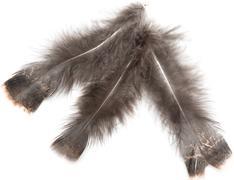 Brown bird feather on white background Stock Photos