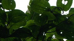 Under the Canopy in the Cloud Forest of Ecuador - stock footage