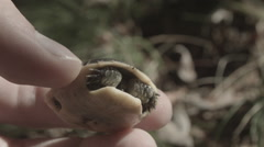 Baby turtle found in it's natural habitat. - stock footage