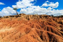 Big cactuses in red desert, clouds and sand, red sand in desert Stock Photos