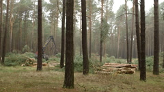 Wide Shot Harvester Felling Machine Lumber a Pine Tree - stock footage