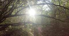 Light Penetrates Through the Leafy Branches of the Trees Stock Footage
