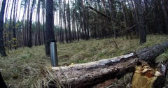 Thermos is on the Dry Fallen Tree in a Pine Forest Stock Footage