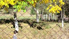 Girl who goes on a road located behind a woven wire fence bordered with trees Stock Footage