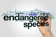 Endangered species word cloud concept - stock photo