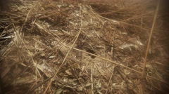Earthen Wasp Brings Out of Its Habitat Excess Resources - stock footage