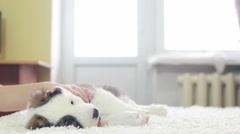Puppy on a bed, slow motion Stock Footage