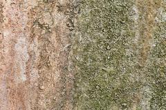 stone grunge texture, fungus, mold - stock photo