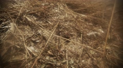 Earthen Wasp Crawls Around Its Nest on Dry Grass Stock Footage