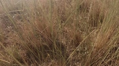 Lizard Stiffened Between the Grass Swaying in Wind - stock footage