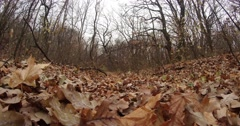 Covered With a Faded Leaves Lawn Among Bare Trees - stock footage