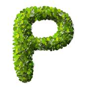 Letter P made of green leaves - stock photo