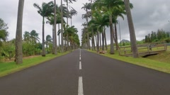 Aerial View of road and palm tree from moving vehicle - stock footage