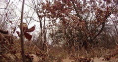 Faded Grass Sways Near Tree With Burgundy Leaves - stock footage