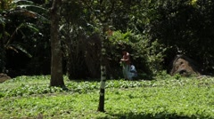 A couple harvesting vegetables on a Latin American Farm Stock Footage