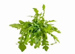 Fresh arugula isolated in a white background Stock Photos
