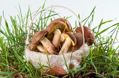 Boletus edulis and white in a basket in green grass - stock photo