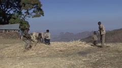 Horses thresh hay while men turning it in Simien Mountains Stock Footage