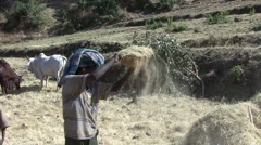 Man sieve grains with basket closeup in Simian Mountains Stock Footage