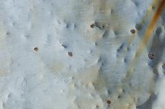 Bullet Holes in Aged Sheet Metal - stock photo