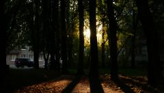 Dark alley, evening sun shine through tree trunk, building at end of way Stock Footage