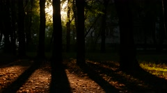 Small dots highlight by sun, fly in air against dark trees, curl around Stock Footage