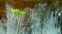 Selective Focus of Tiny Tree Leaf Stem over Waterfall Stock Footage