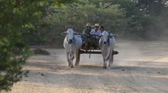 Burmese rural people riding on wooden wagon drawn by buffaloes. Bagan, Myanmar Stock Footage