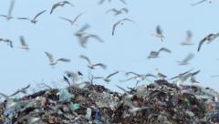 Rubbish dump birds Stock Footage
