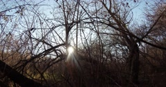 Sunlight Falls on the Bare Branches of the Trees in the Forest - stock footage